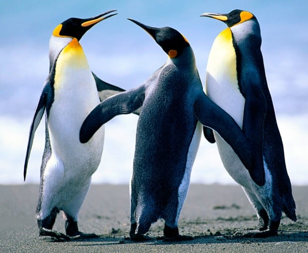 DO NOT USE Penguin trio