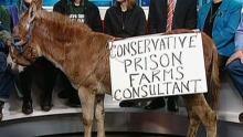 Donkey On TV