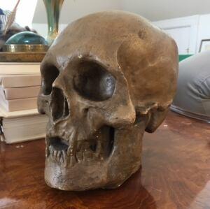 Robert the Bruce cast of skull