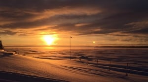Seal Point sunset