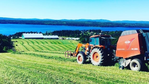 The Newfoundland and Labrador government is looking to increase farming in the province by turning 64,000 hectares of Crown land into agricultural production land.