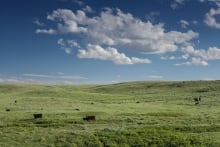 Grasslands 1