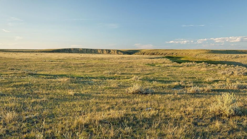 Abandoned prairie farms would likely revert to grassland, much like this.