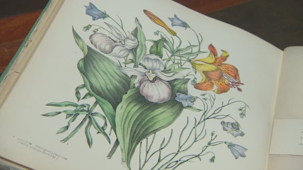 One of Agnes Fitzgibbon's paintings from her 1869 book Canadian Wild Flowers that was part of a U of T botany presentation Tuesday evening.