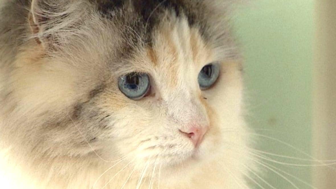 Regal Cat Cafe Menu