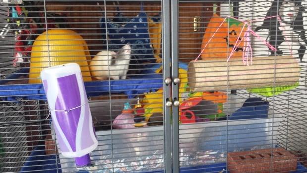 Rat Haven