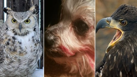 I know what an owl looks like: Owner insists dogs attacker was an eagle