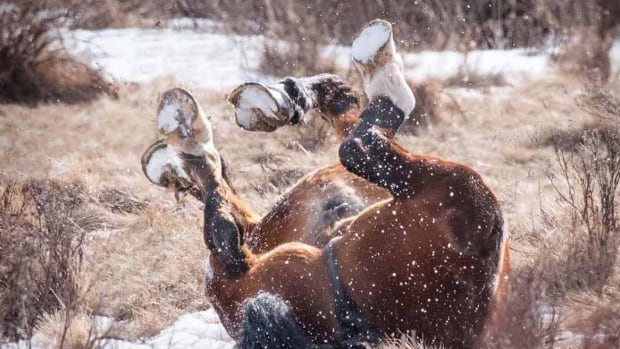 Wild horses near Rocky Mountain House put on quite the show for one Alberta photographer. (Rick Price Photography)