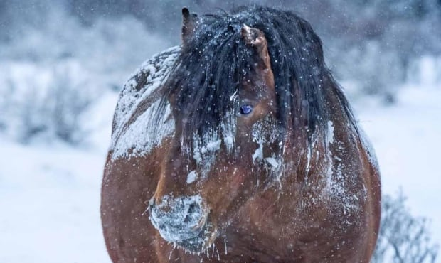 close up horse snowy