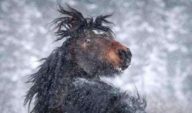 horse looks back