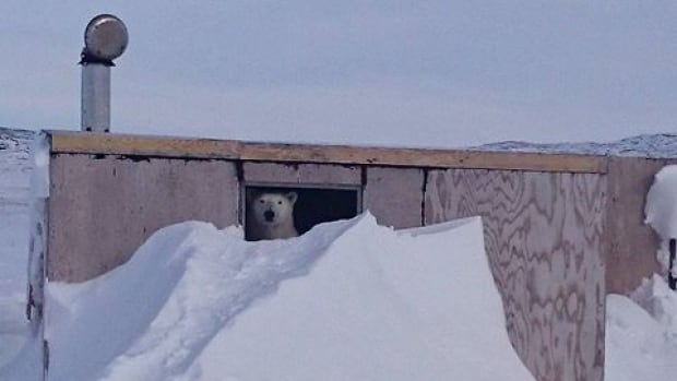Pauloosie Kasudluak, the mayor of Inukjuak, Que., spotted this polar bear while coming back from a hunting trip near his community.