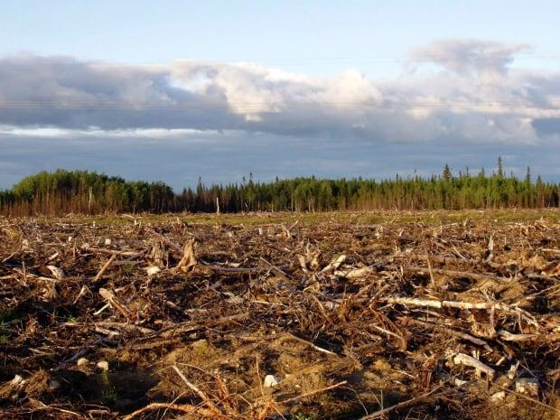 Canada Logging Agreement