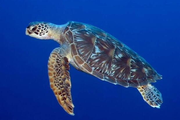 Richard Vevers turtle