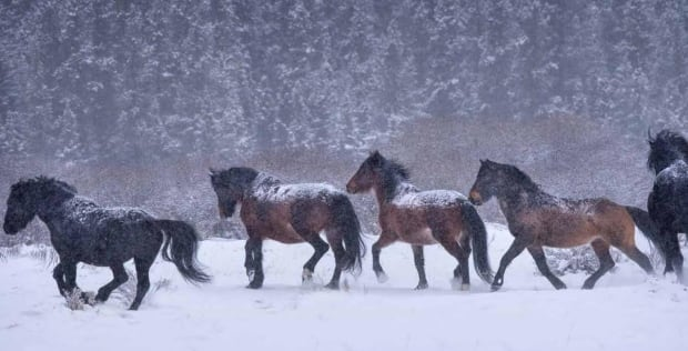 horses rick price