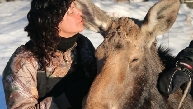 A moose struggling on the ice at Shoal Lake, Ontario, was distraught at first but then allowed its rescuers to get close and pet it, says Barbara Holmstrom.