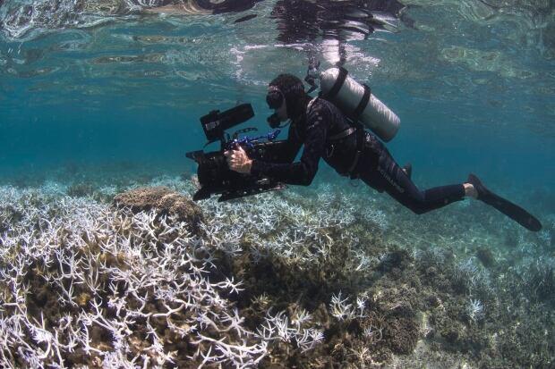 Coral in American Samoa