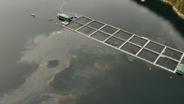 This photograph shows what appears to be fuel in the water around the Burdwood Fish Farm just north of Echo Bay B.C., which is northeast of Port McNeill on Vancouver Island.