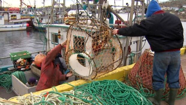 Scientists say the crab stock off Newfoundland and Labrador is down 40 per cent, and fishermen will soon find out how they will be affected.