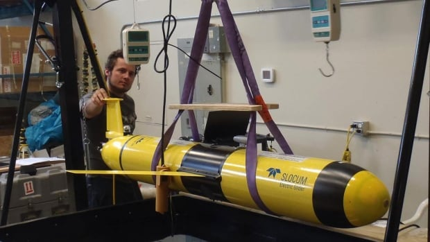 Three torpedo-like gliders were used to gather data on grey whale habitat off the west coast of Vancouver Island.