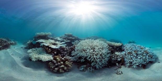 Maldives Global Coral Die-Off