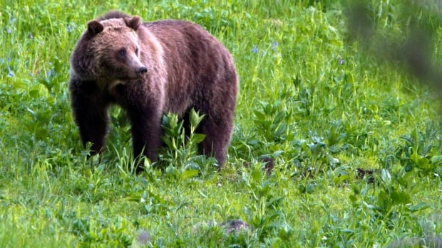 Experts say bears usually emerge from their dens after a winter of hibernation in March or April.