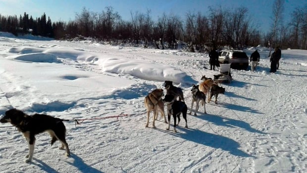 A Skookum Expeditions sled dog team helps pull a tourist's stuck car out of the snow on the Chena River near Pike's Landing in Fairbanks, Alaska on Sunday.