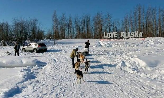 Car Sled Dogs