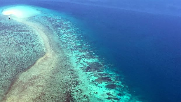 In this Nov. 2016 photo provided by ARC Center of Excellence for Coral Reef Studies a severely bleached reef is seen from the air along the inner shelf between Cape York and Cape Tribulation, Great Barrier Reef, Australia.