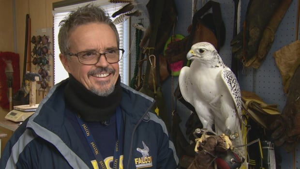 Falcon handler Keith Everett works with about 30 birds who are trained to scare other birds away from the runway at Toronto's Pearson International Airport.