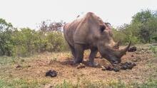 White rhino using social media
