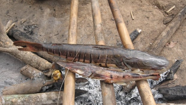 Tsimane fish