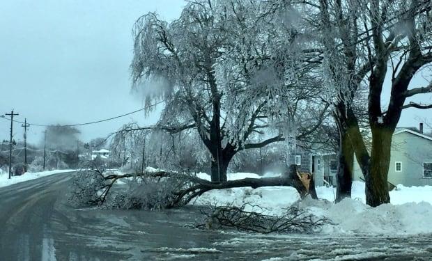 ice on Cape Breton trees
