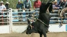 Bull riding Lumby