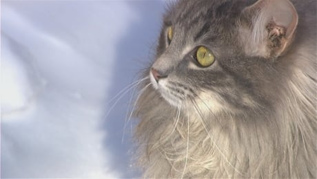 Dryden to tackle feral cat issue with help from Second Chance Pet Network