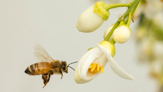 A new study has found that a common pesticide used on corn and soy has severe consequences for bee hives.