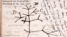 Darwin manuscript