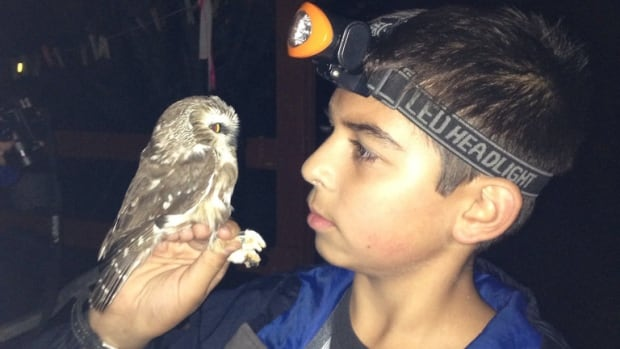 Liam Singh studies the gaze of a saw-whet owl.