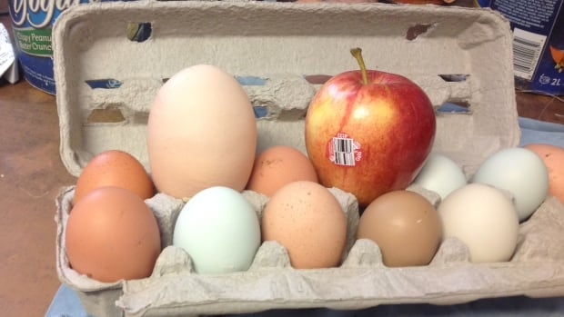 A regular large chicken egg weighs between 50 and 58 grams. Goslow's egg weighed in at a whopping 180 grams.