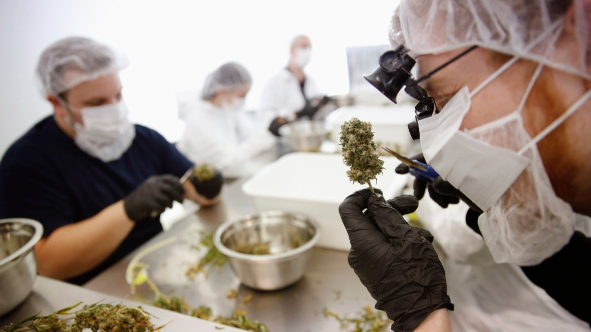 Marijuana industry gets boost from legalization target date