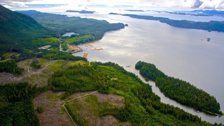 First Nation 'deeply disappointed' after Steelhead LNG pulls out of Vancouver Island project