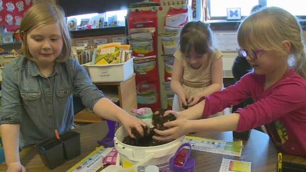 Three Grade 1 students get their hands dirty planting green and yellow beans.