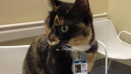 Georgie the beloved hospital cat moves on to new pastures