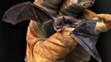 Hope For Bats