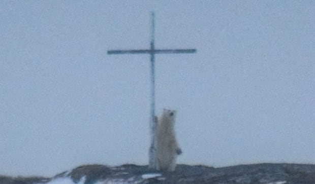 praying polar bear Ocean View Photography