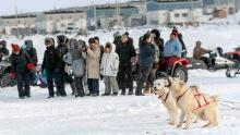 Ivakkak sled dog race dogs