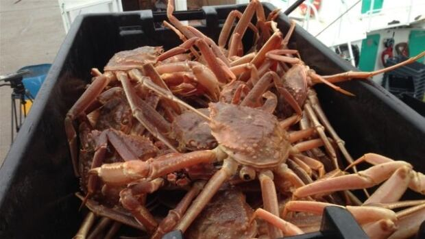 A catch of crab aboard a New Brunswick crab vessel