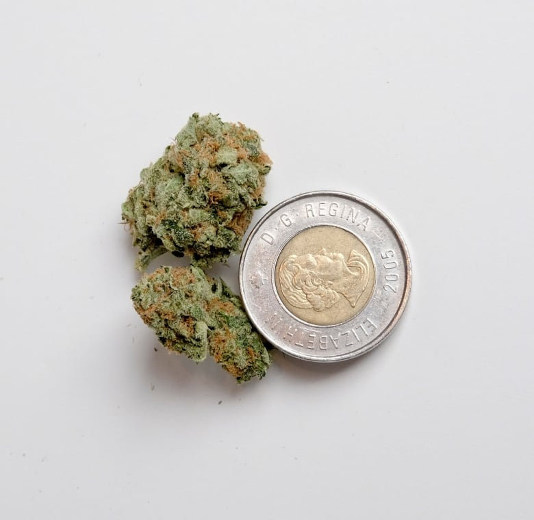 One gram of dried marijuana bud, with a $2 coin for comparison. The size of  a gram varies depending on the density of the bud. (Evan Mitsui/CBC)