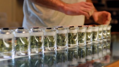 New details on training for Cannabis NB employees