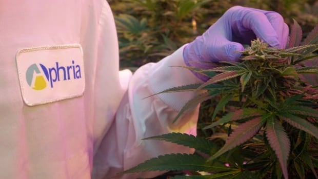 Leamington medicinal marijuana producer Aphria has major plans to move into the recreational market now that the federal government has said it will legalize recreational pot by July 2018.