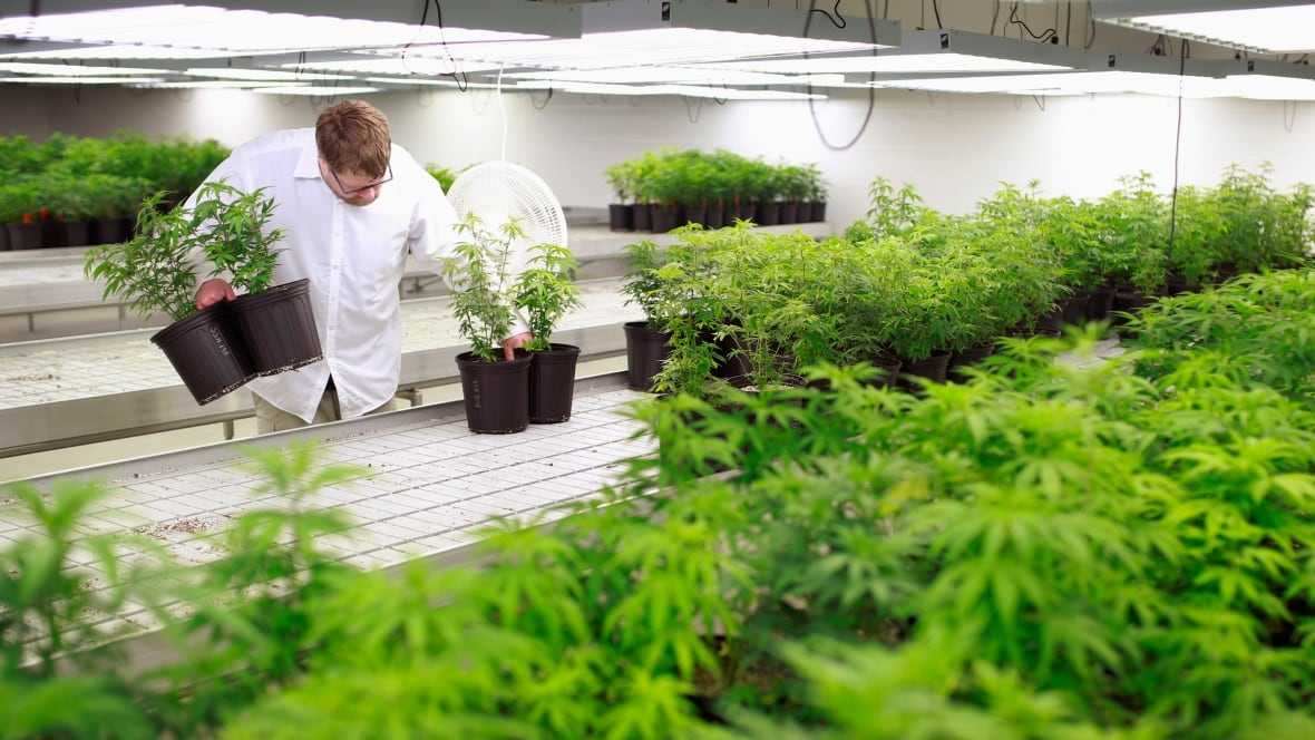 medical marijuana application nova scotia